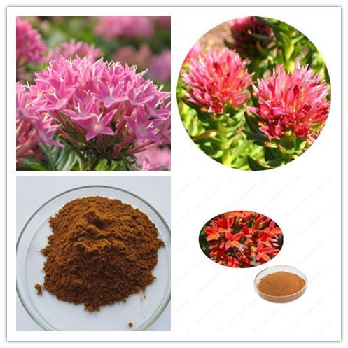 Rhodiola Rosea extract.jpg