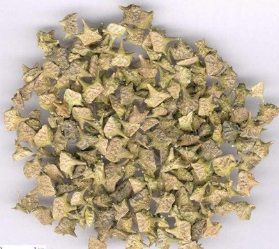 tribulus terrestris seeds.jpg