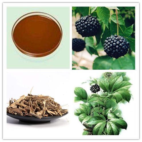 siberian ginseng extract.png